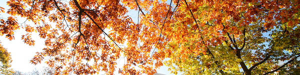 Orange, red, and yellow leaves on trees in autumn